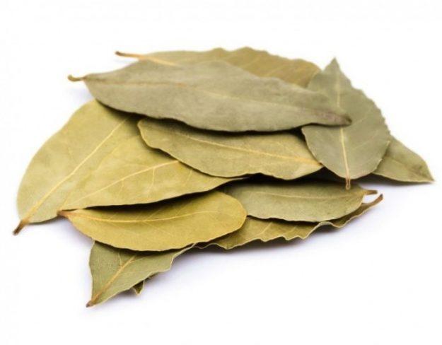 أوراق-الجوافة المغرب